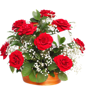 akvaryumda kırmızı güller