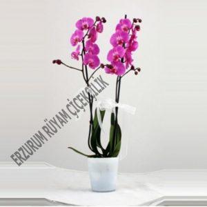 orkide güller atama