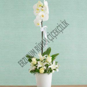 orkide lilyum kazabilanka beyaz güller